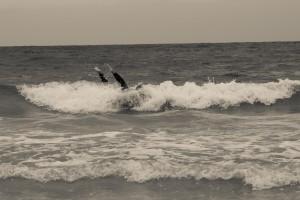 14 - Peniche Surfen (36)